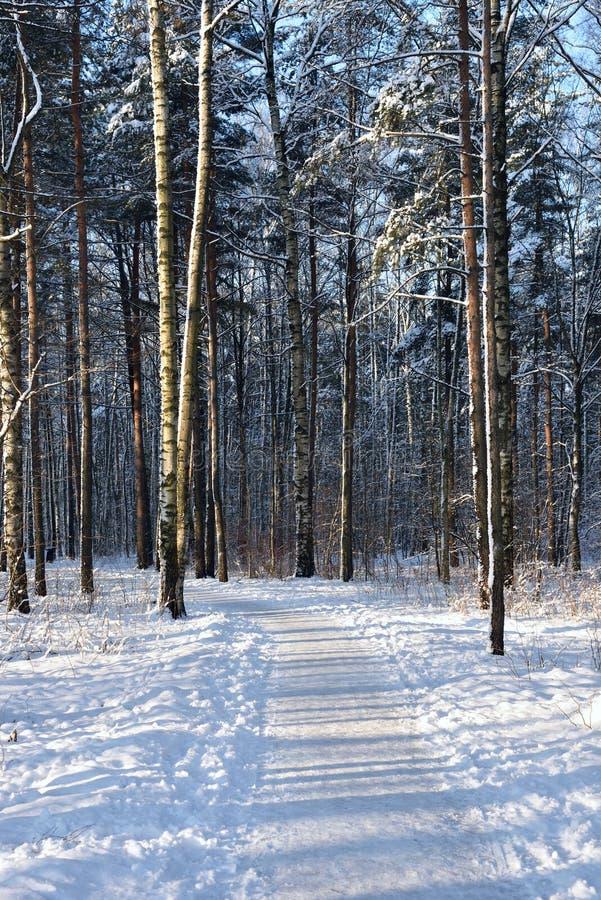 Ścieżka w zima lesie obraz royalty free