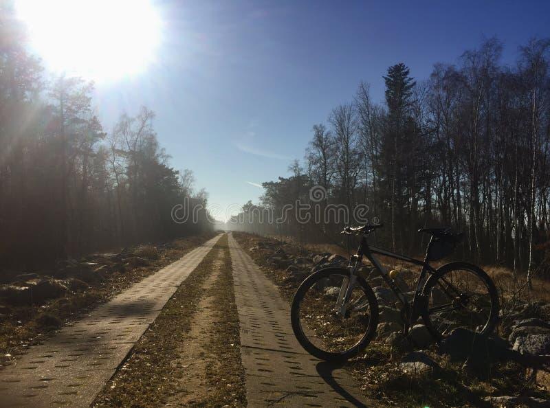 Ścieżka wzdłuż Bałtyckiego wybrzeża obrazy royalty free
