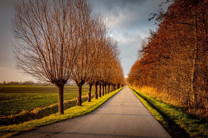 Ścieżka wzdłuż lasu na pięknym zima dniu zdjęcia royalty free