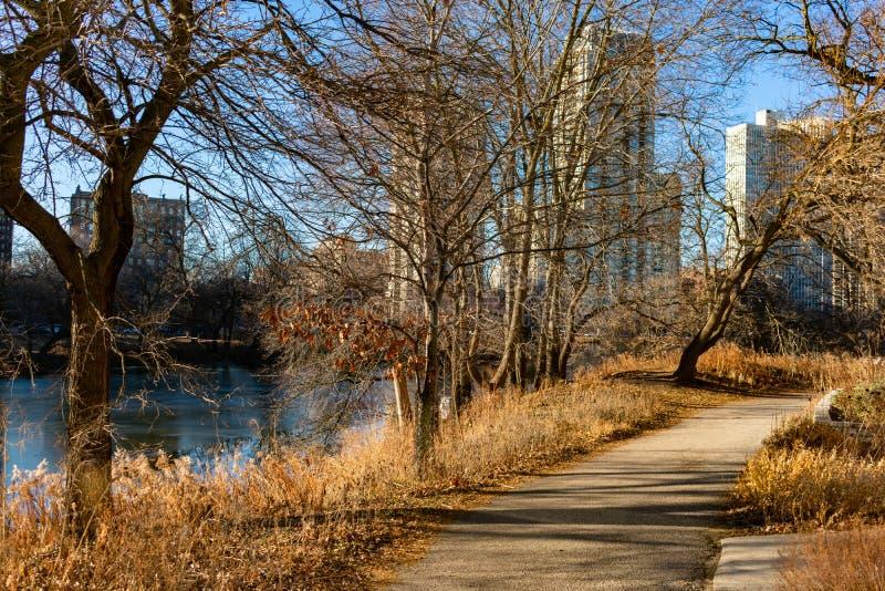 Ścieżka wzdłuż Północnego stawu podczas jesieni z Popołudniowym słońcem w Lincoln parku Chicago fotografia stock