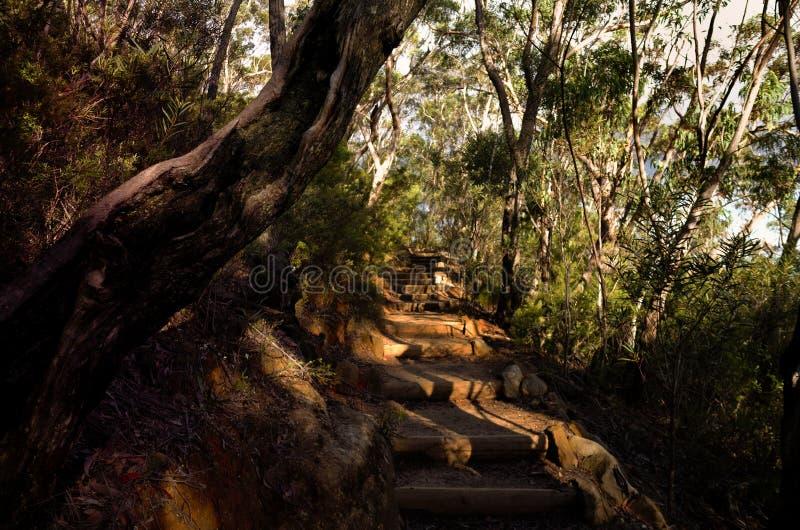 Ścieżka z kamieni krokami w eukaliptusowym lesie w Australijskim krzaku zdjęcia stock