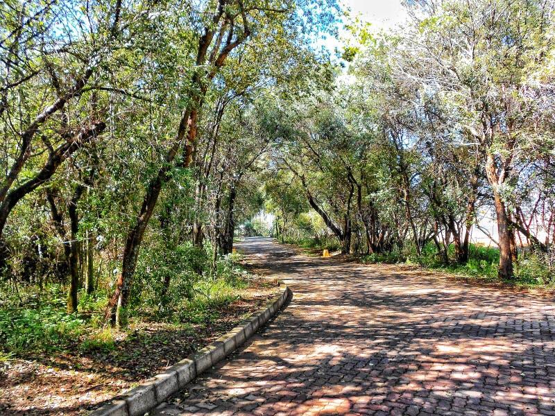 ścieżka zielona zdjęcie stock
