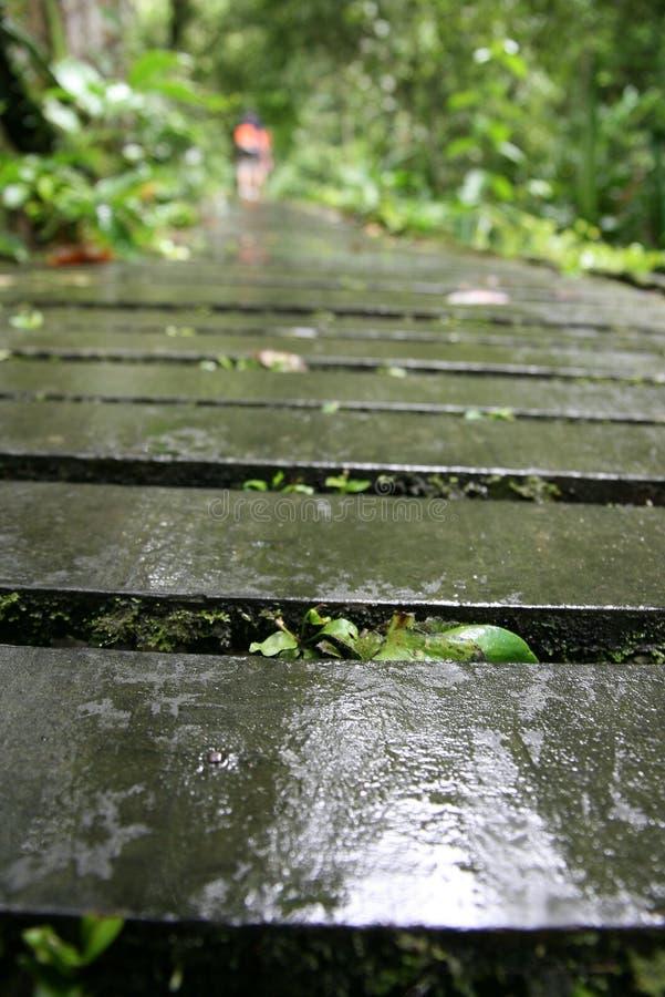 ścieżki drewniany śliski mokry obrazy stock