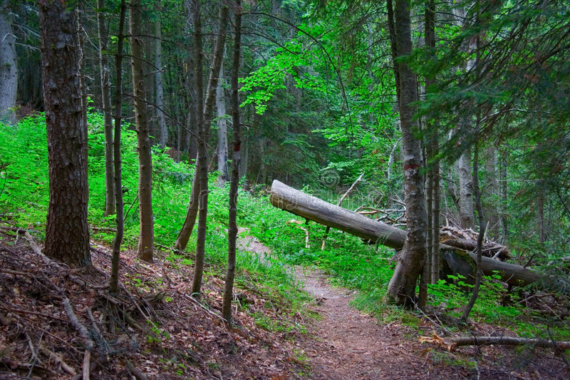 ścieżki lasu zdjęcia royalty free