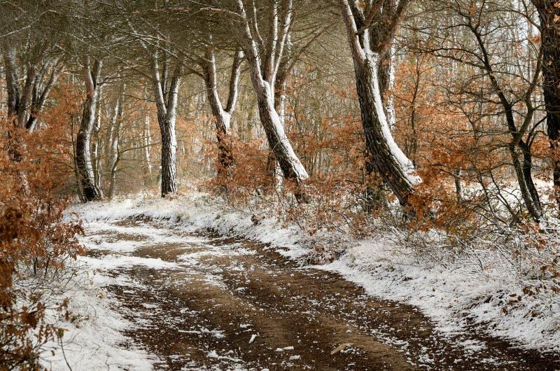 ścieżki zima zdjęcie royalty free