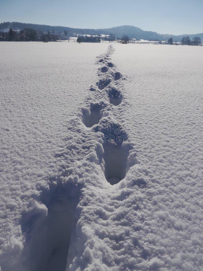 Ścieżki zimy krajobraz zdjęcia stock