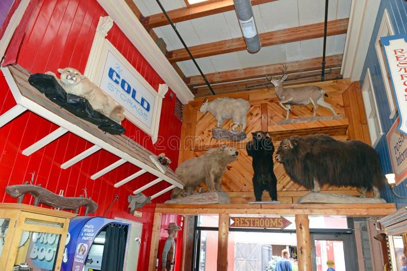 Ścienna apteka, Południowy Dakota, Usa obraz royalty free