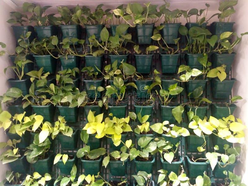 Ścienna Roślina zdjęcie royalty free