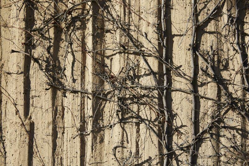 Ścienne tekstury i wysuszeni bushropes obrazy stock