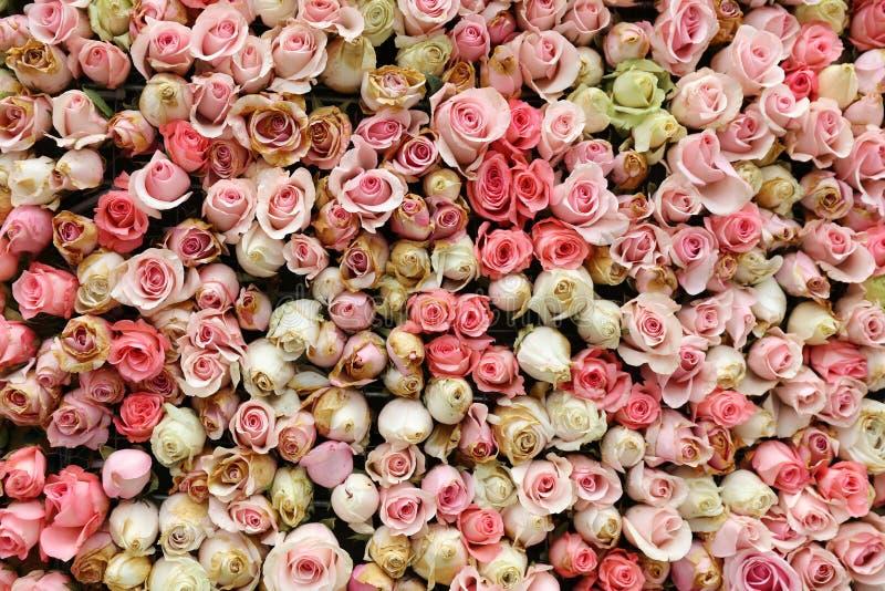 Ścienny kwiat z róża wzorem zdjęcia stock