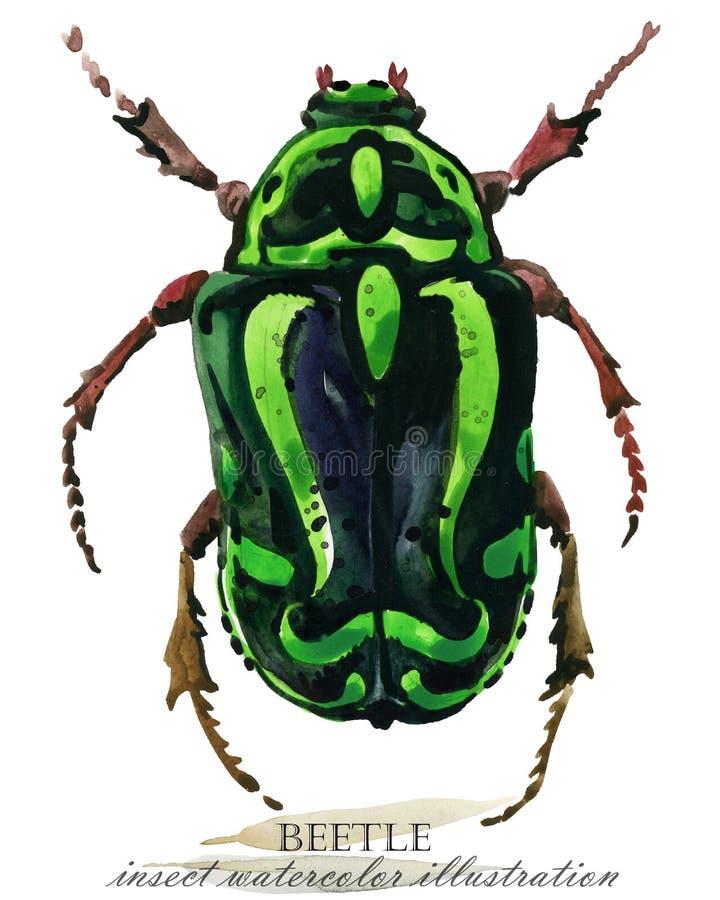 ściga Insekt akwareli ilustracja ilustracja wektor