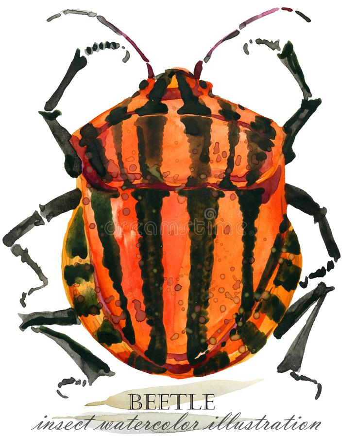 ściga Insekt akwareli ilustracja royalty ilustracja