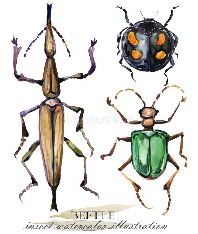 ściga Insekt akwareli ilustracja ilustracji