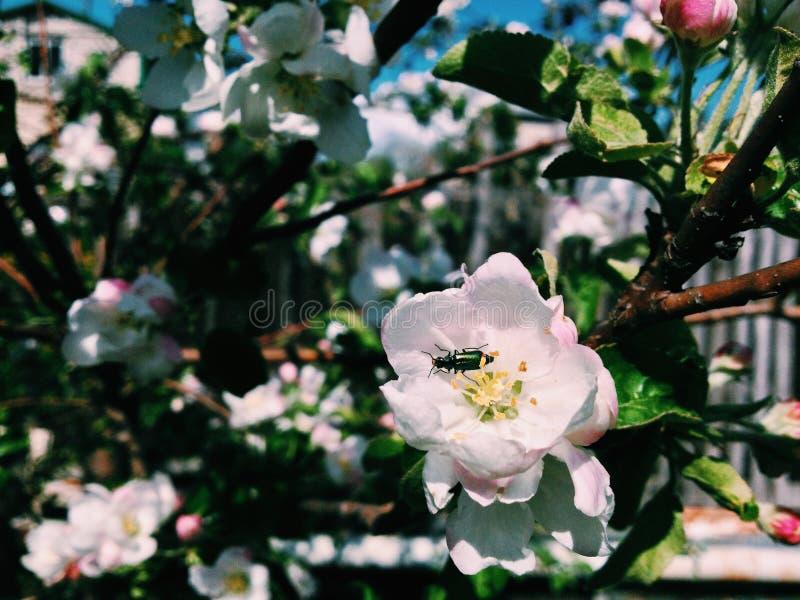Ściga na kwiacie zdjęcia stock