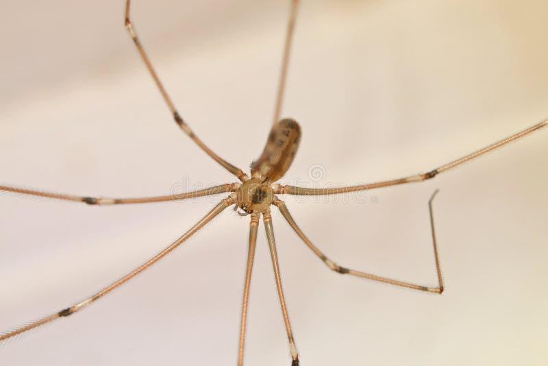 Ścigi, pająki, insekty zdjęcie royalty free