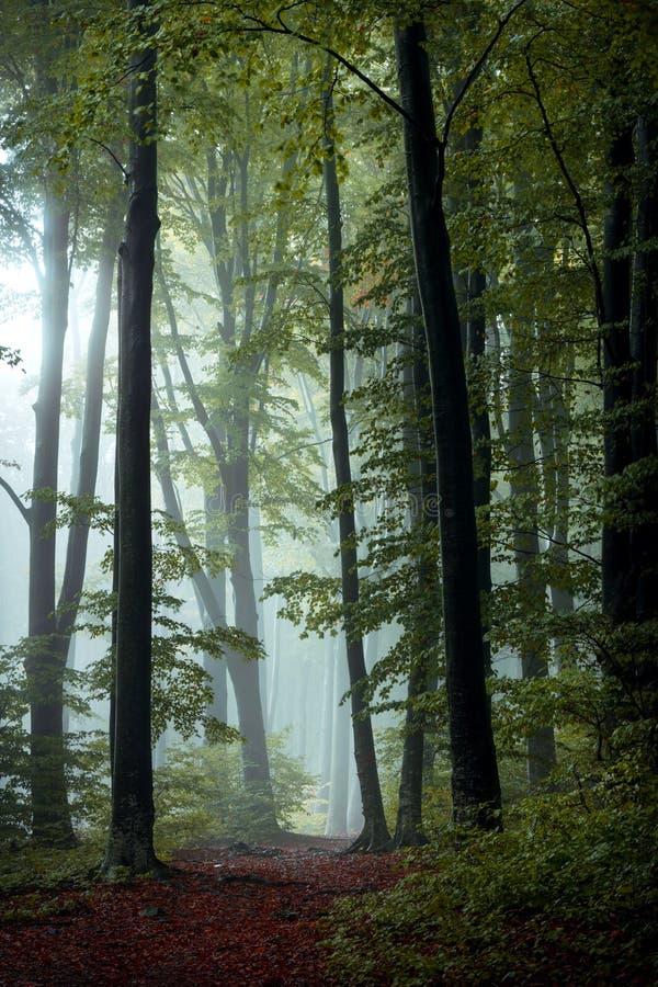 Ślad bajki w jesiennym mgłę w lesie Wróżki obraz stock