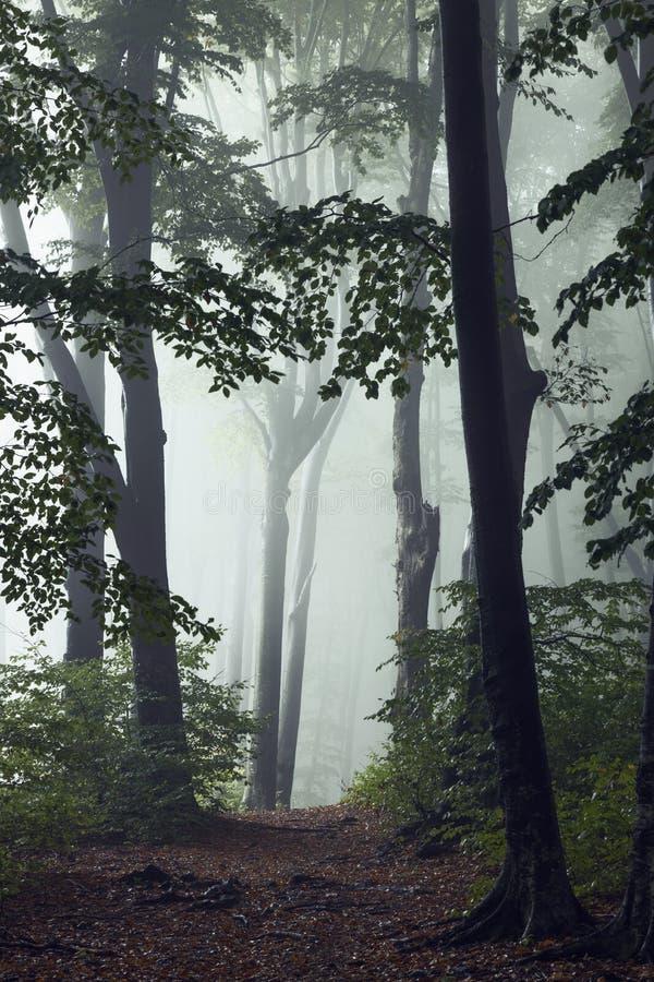Ślad bajki w jesiennym mgłę w lesie Wróżki obrazy stock