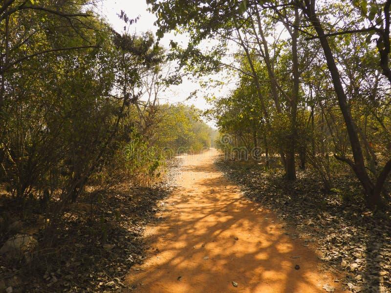 Ślad przy Aravali różnorodności biologicznej parkiem Delhi obrazy stock