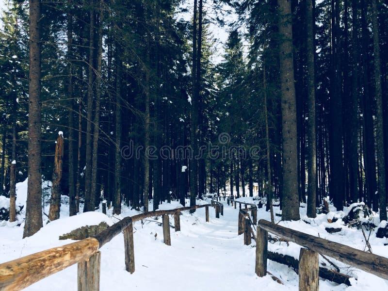 Ślad w halnym lesie zdjęcie stock