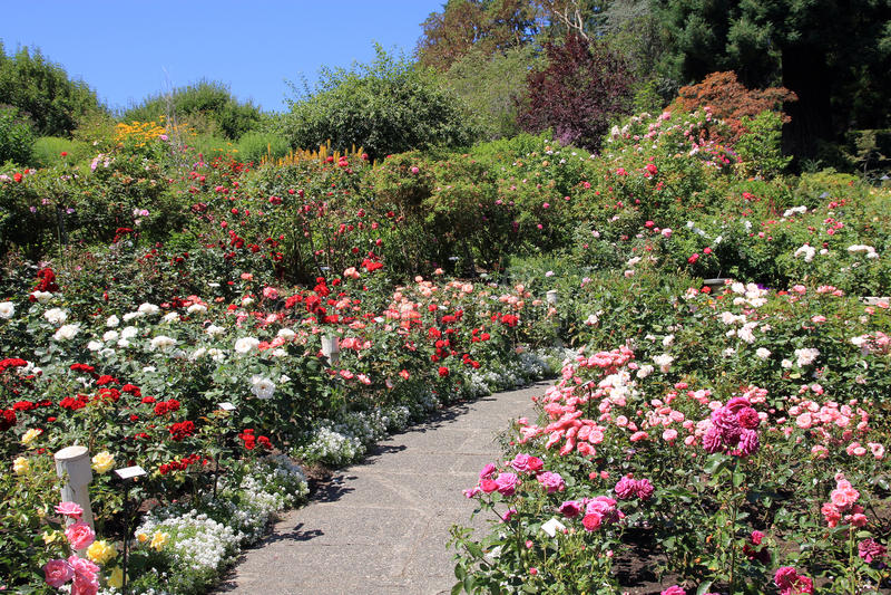 Ślad w ogródzie zdjęcia royalty free
