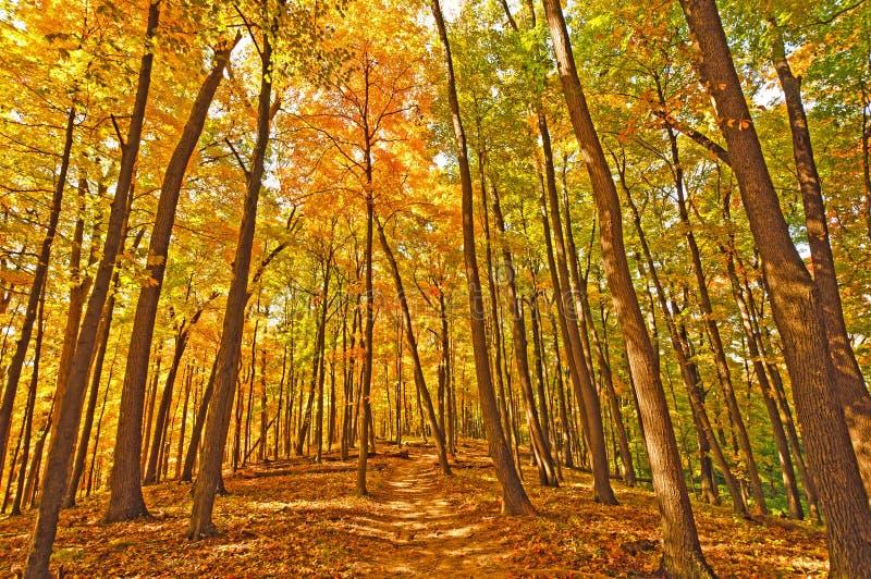 Ślad w spadków lasowych kolory fotografia stock