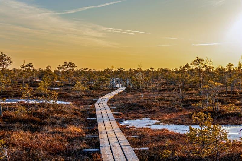 Ślad wzdłuż drewnianych przejść przez moorland w Kemeri parku narodowym z pięknym wieczór słońca światłem przy zmierzchem obraz royalty free