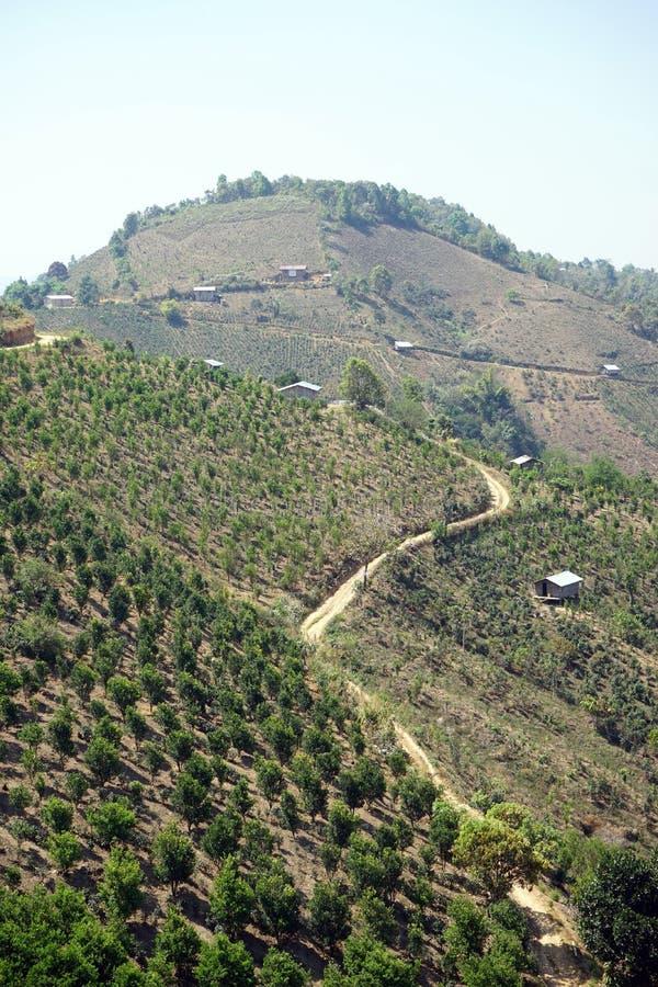 Ślad wzdłuż herbacianych plantacj obrazy royalty free