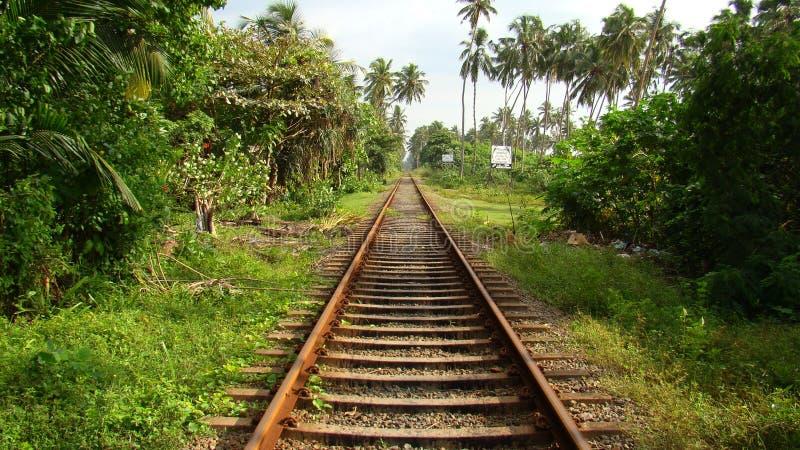 Ślada na Sri Lanka wyspie fotografia stock