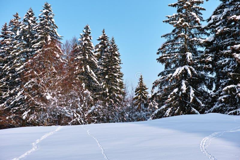 Ślada w śniegu w kierunku drewien zdjęcie royalty free