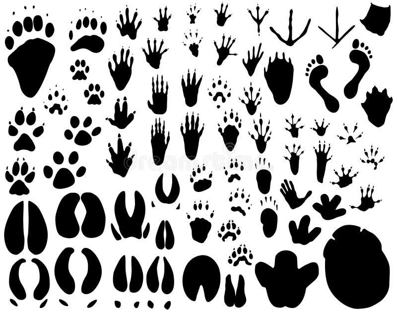 ślady zwierząt ilustracji