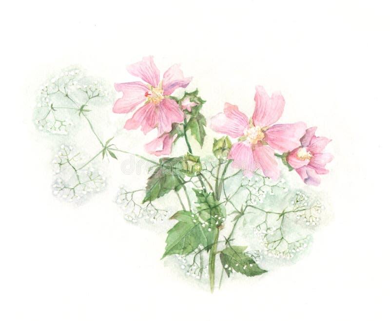 ślazu obrazu akwarela ilustracji