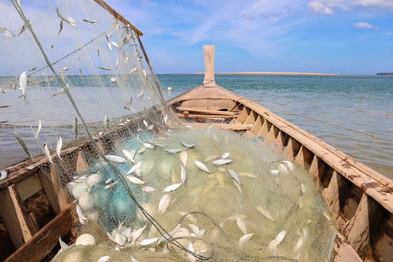 Śledź w sieci na łodzi rybackiej zdjęcie stock