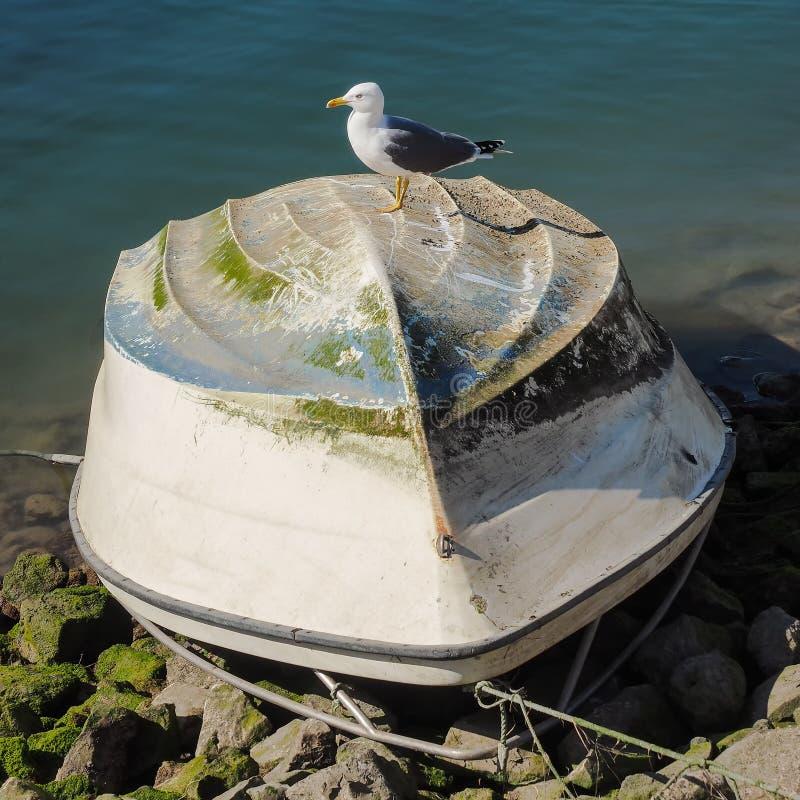 Śledziowy frajer siedzi na obracającej łodzi rybackiej obrazy royalty free