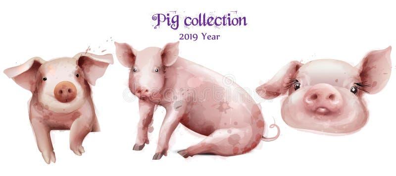 Śliczna świni ikona ustawiająca w akwarela wektorze Świniowatych nowy rok symboli/lów odosobneni szablony royalty ilustracja