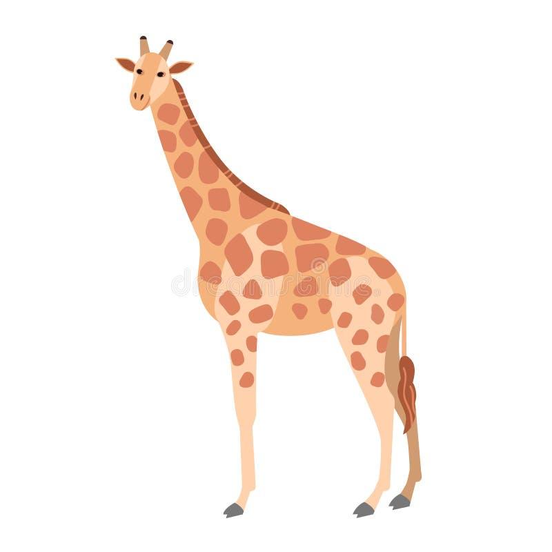 Śliczna żyrafa odizolowywająca na białym tle Wspaniały trawożerny egzotyczny Afrykański zwierzę Oszałamiająco dzicy gatunki Afryk ilustracja wektor