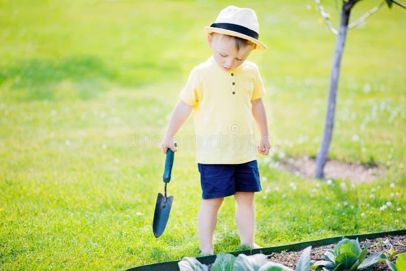 Śliczna berbeć chłopiec pracuje w ogródzie, kabaczek rośliny zdjęcie stock