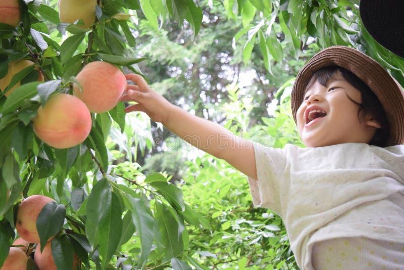 śliczna chłopiec podnosi owoc które są świeżymi brzoskwiniami obraz royalty free