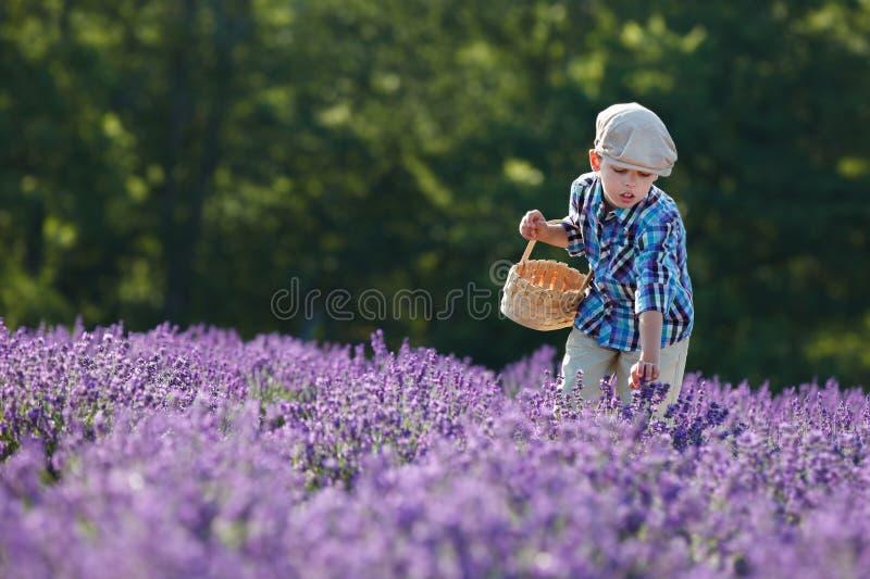 Śliczna chłopiec z koszem w lawendy polu obrazy stock