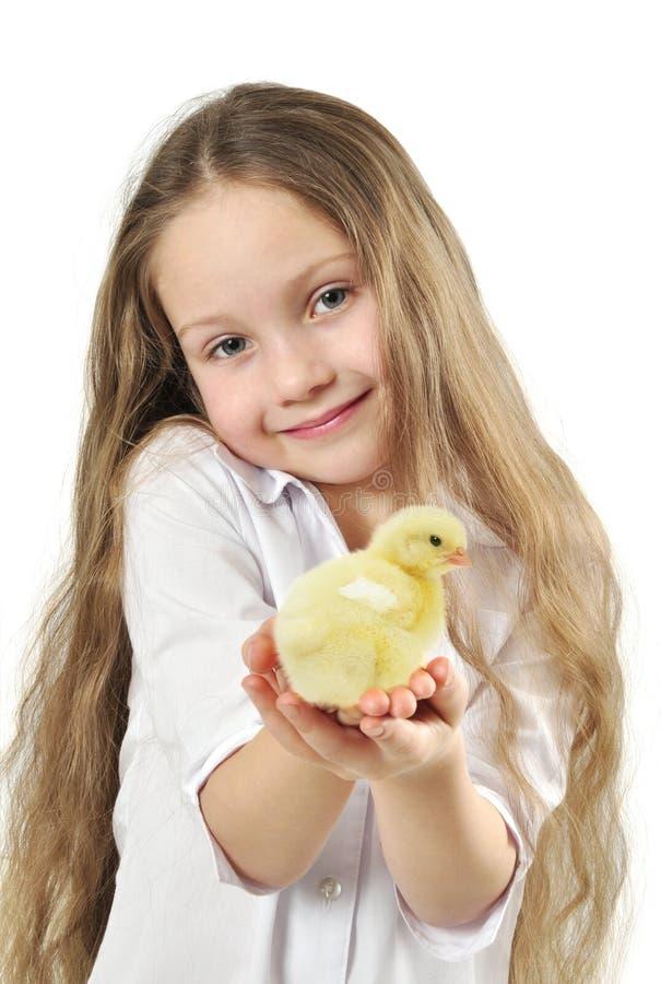 Śliczna dziewczyna trzyma małego żółtego kurczątka obraz royalty free