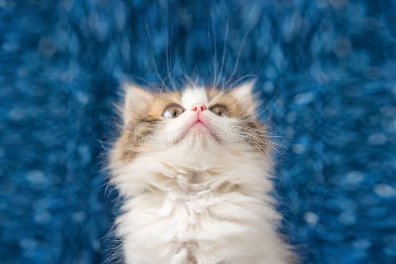Śliczna figlarka przyglądająca w górę niespodzianki na błękitnym tle z obraz stock