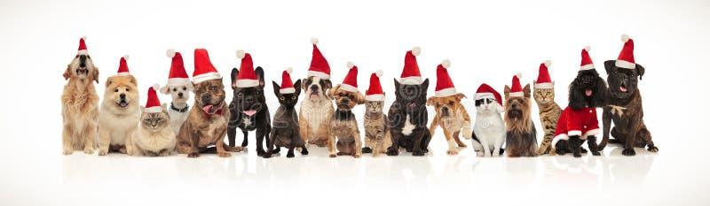 Śliczna grupa boże narodzenie koty i psy różni trakeny obraz royalty free