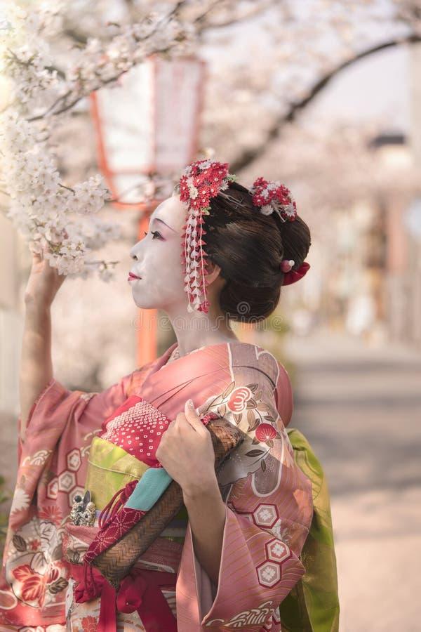 Śliczna japońska gejszy Maiko dziewczyna podziwia czereśniowych okwitnięcia przy su w kimonie pozuje w profilu zdjęcia stock
