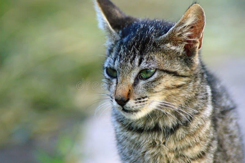 Śliczna kot twarz fotografia royalty free