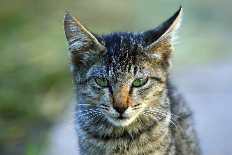 Śliczna kot twarz zdjęcia stock