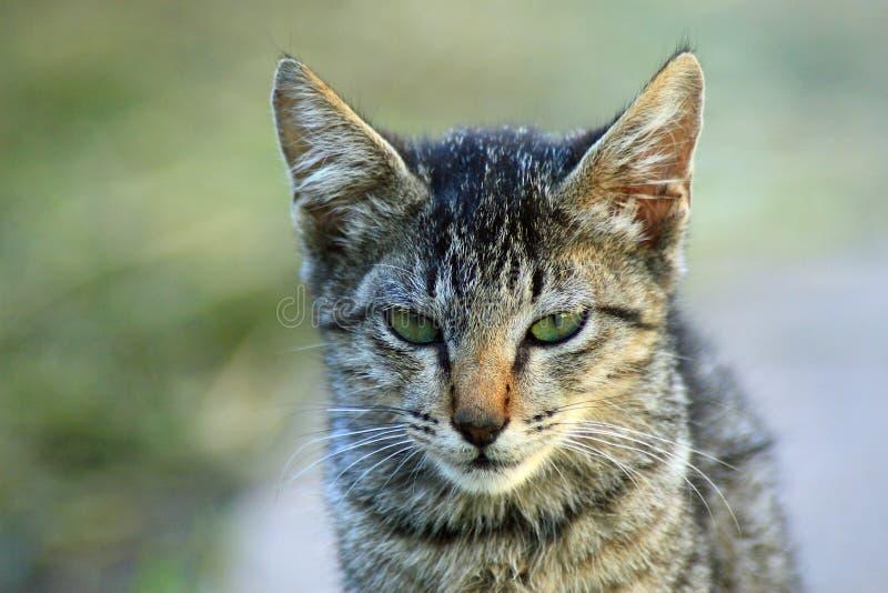 Śliczna kot twarz zdjęcie royalty free