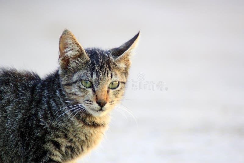 Śliczna kot twarz obraz stock