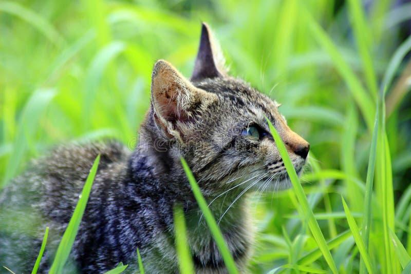 Śliczna kot twarz fotografia stock