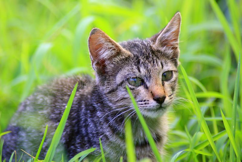 Śliczna kot twarz zdjęcie stock