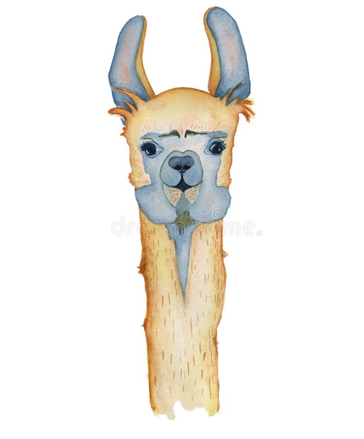 Śliczna lamy postać z kreskówki akwareli ilustracja, Alpagowy zwierzę, ręka rysujący styl Odosobniony biały tło royalty ilustracja
