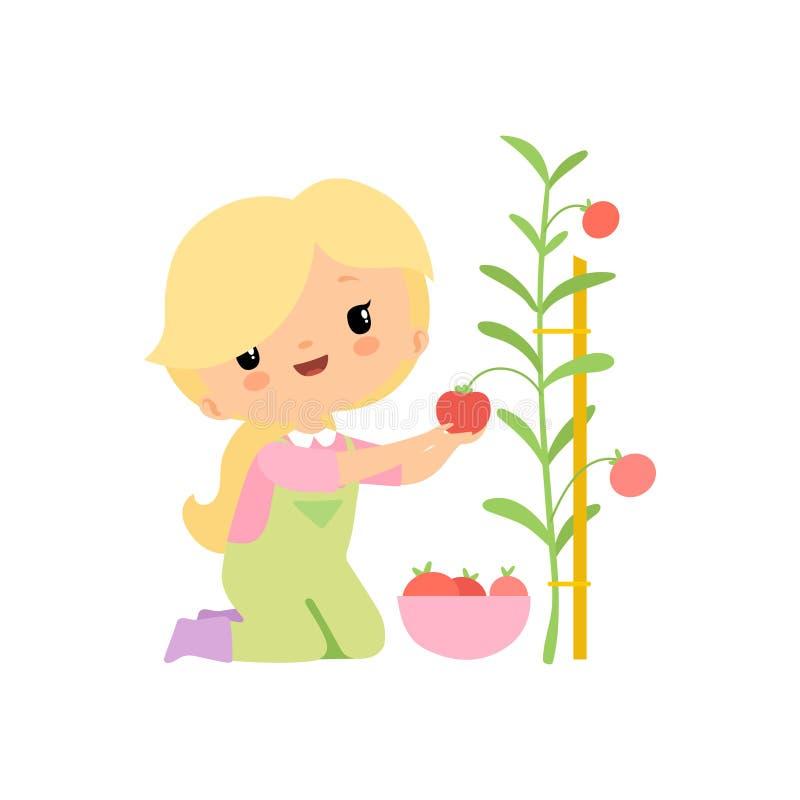 Śliczna młoda dziewczyna Zbiera pomidory w pucharze w kombinezonach i Gumowych butach, Średniorolna dziewczyny postać z kreskówki royalty ilustracja